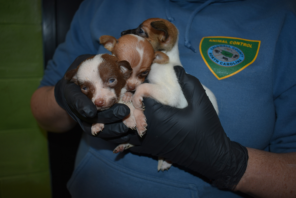 rescued puppies being carried