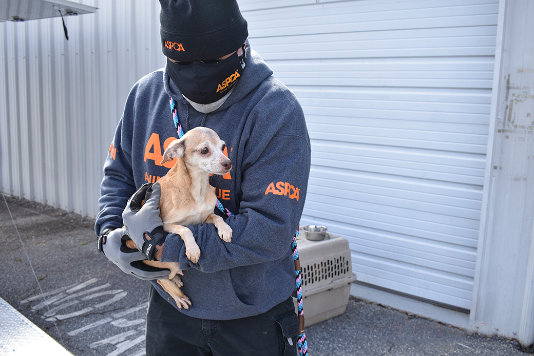 a dog being carried by an aspca responder