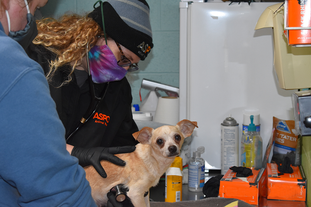 a rescued dog being examined