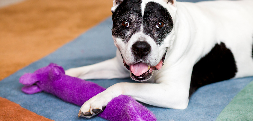 Injured Dog Found Abandoned by Roadside