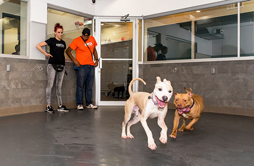 Exciting News: ASPCA Completes Expansion of Rehabilitation Center for Canine Cruelty Victims