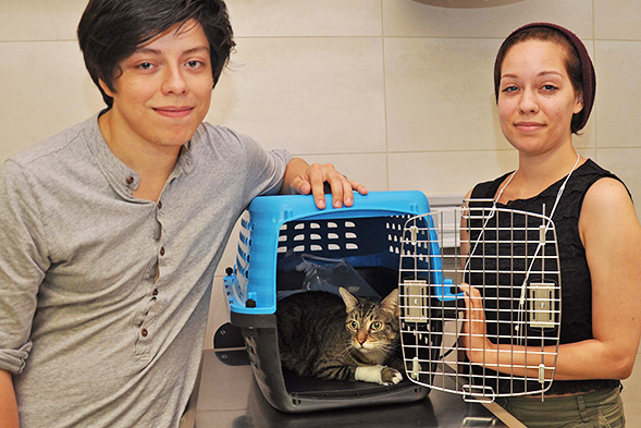 Pet Health Alert: Urinary Blockage in Cats can be Life Threatening