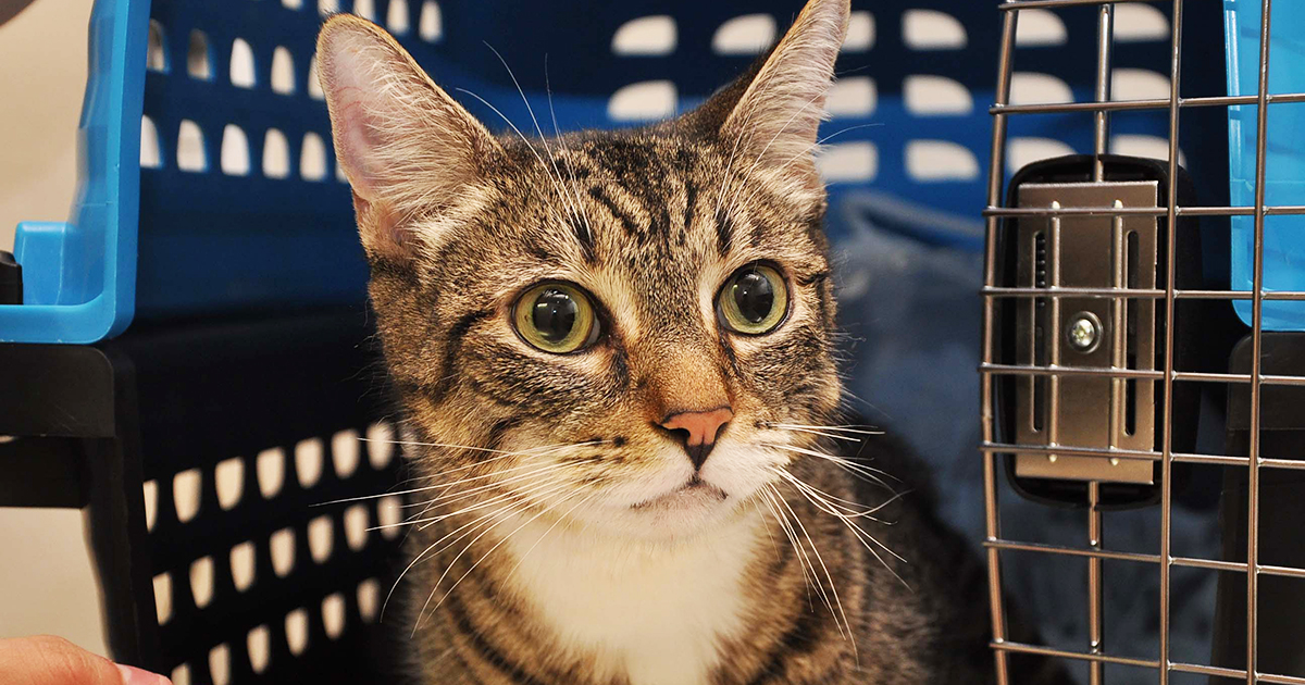 Pet Health Alert Urinary Blockage In Cats Can Be Life