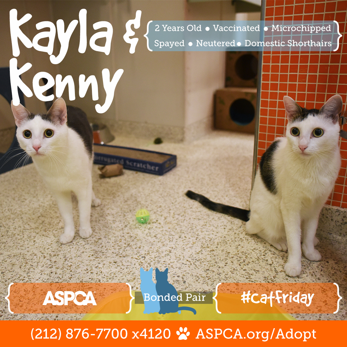 Better Than Black Friday Don t Miss Cat Friday at the ASPCA