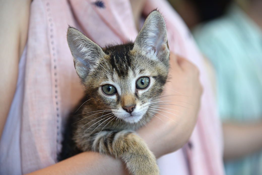 a brown tabby kitten being held by a person with a pink shirt