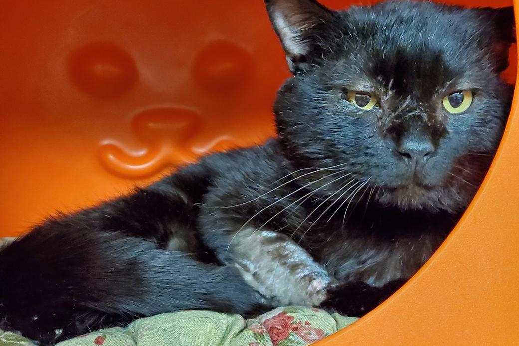 a black cat in an orange hidey box