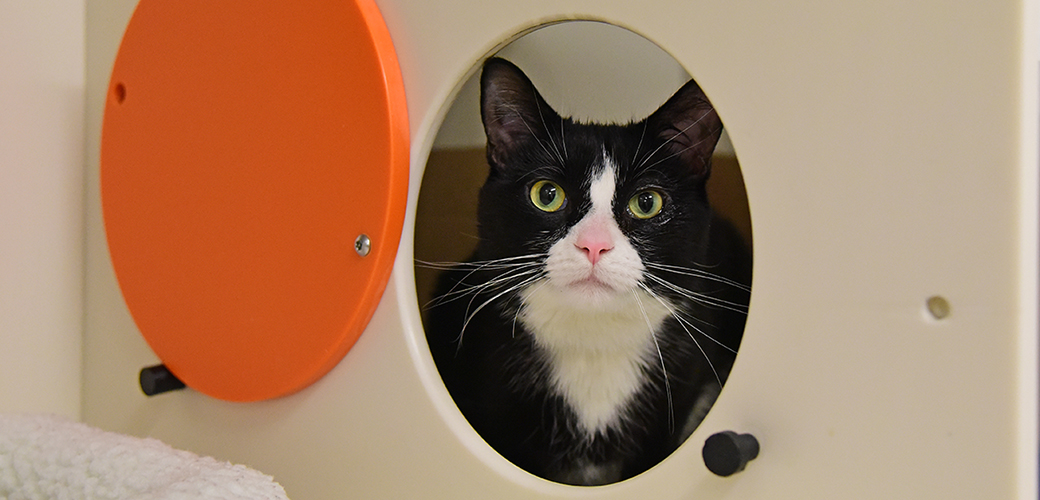 a black and white cat looking through a portal