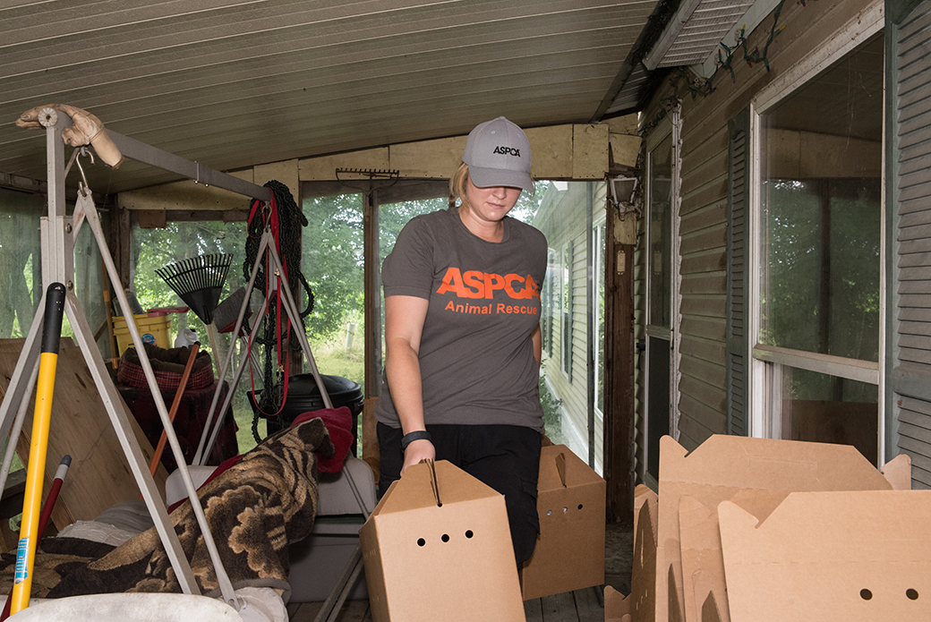 ASPCA responder removing cats from the house