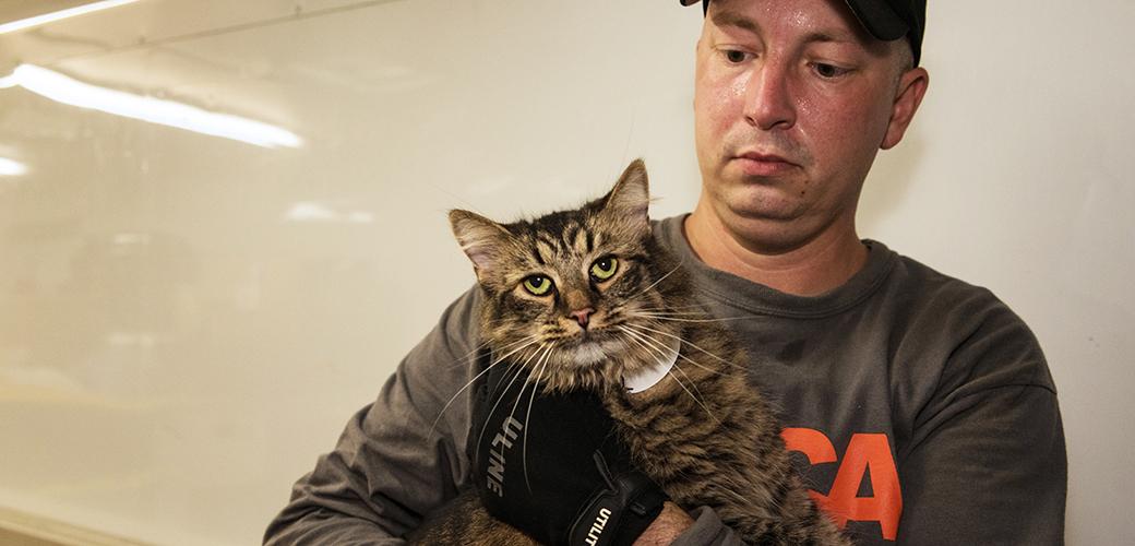 ASPCA volunteer rescuing cat