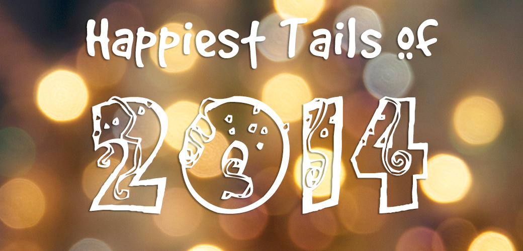 Celebrating an Amazing Year of Happy Tails