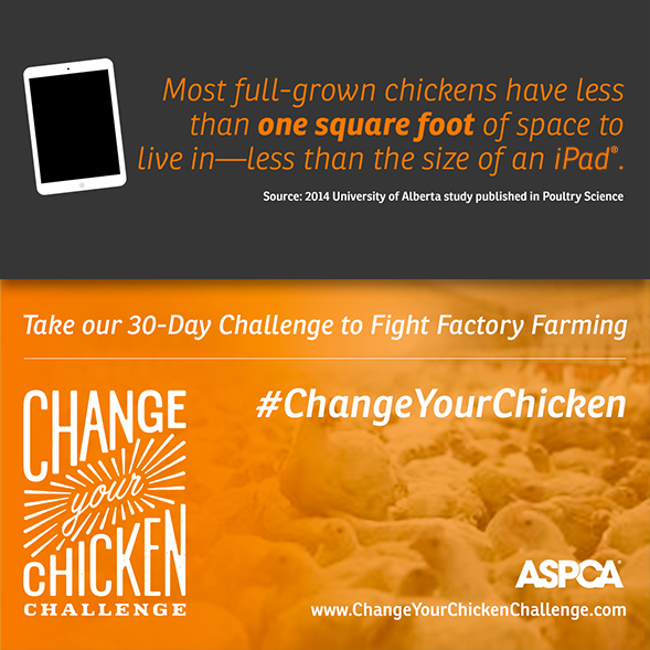 Announcing the Change Your Chicken Challenge