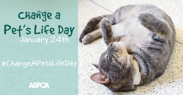 """Change a Pet's Life Day"" Story Contest"
