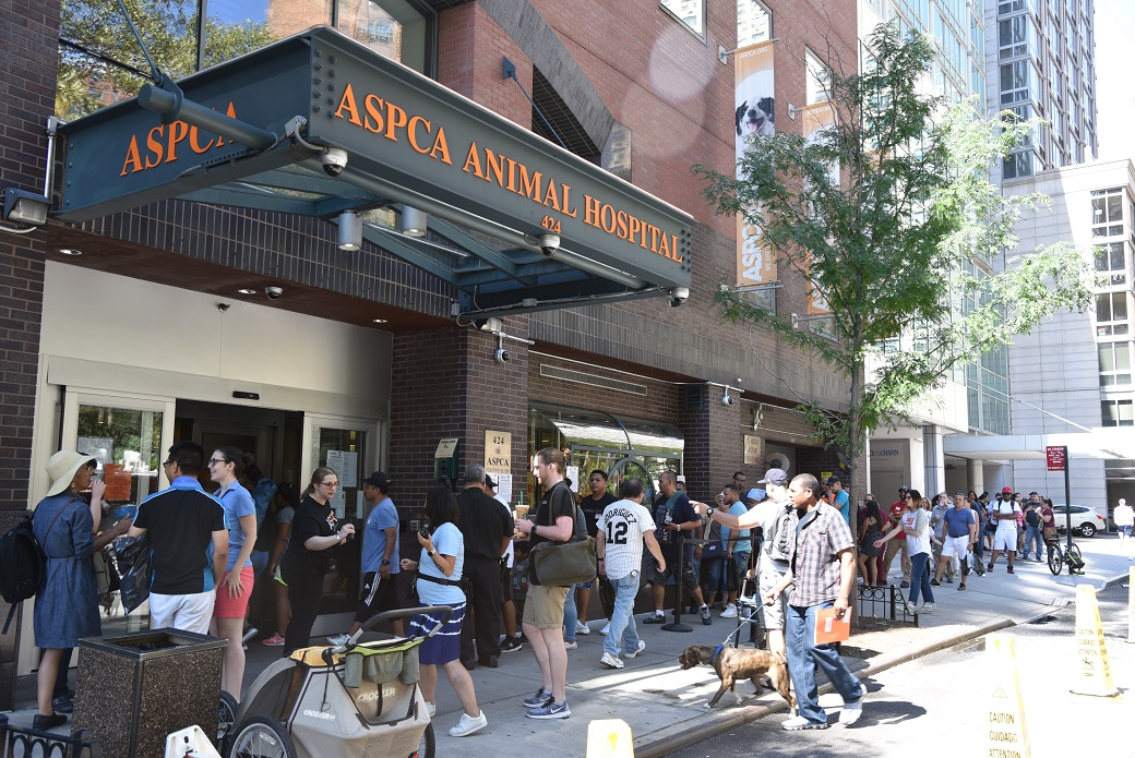 The crowd outside the ASPCA started forming at 5:30 A.M. Saturday, August 19, for Clear the Shelters.