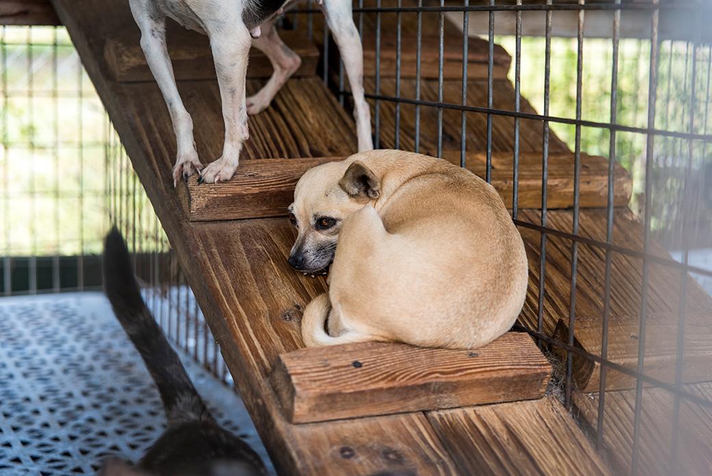 Puppy Mill Dog Behavior