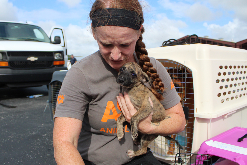 A volunteer holding a puppy