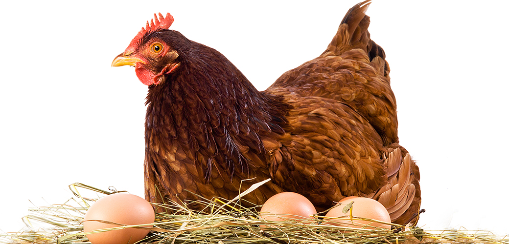 Commending Walmart's Cage-Free Commitment