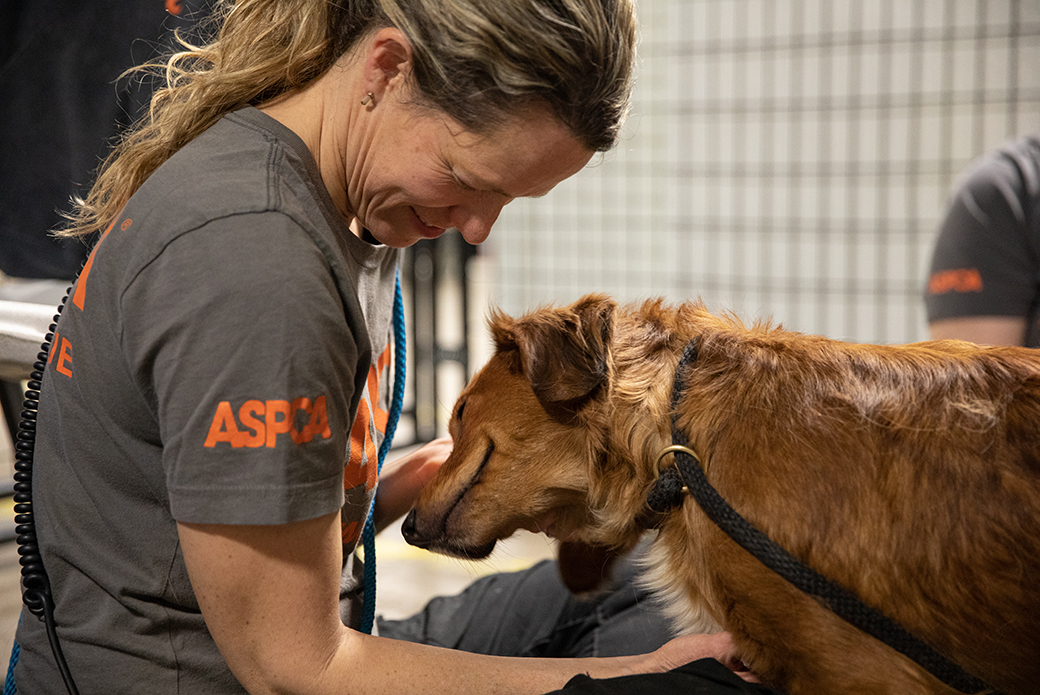 an aspca responder with a rescued dog