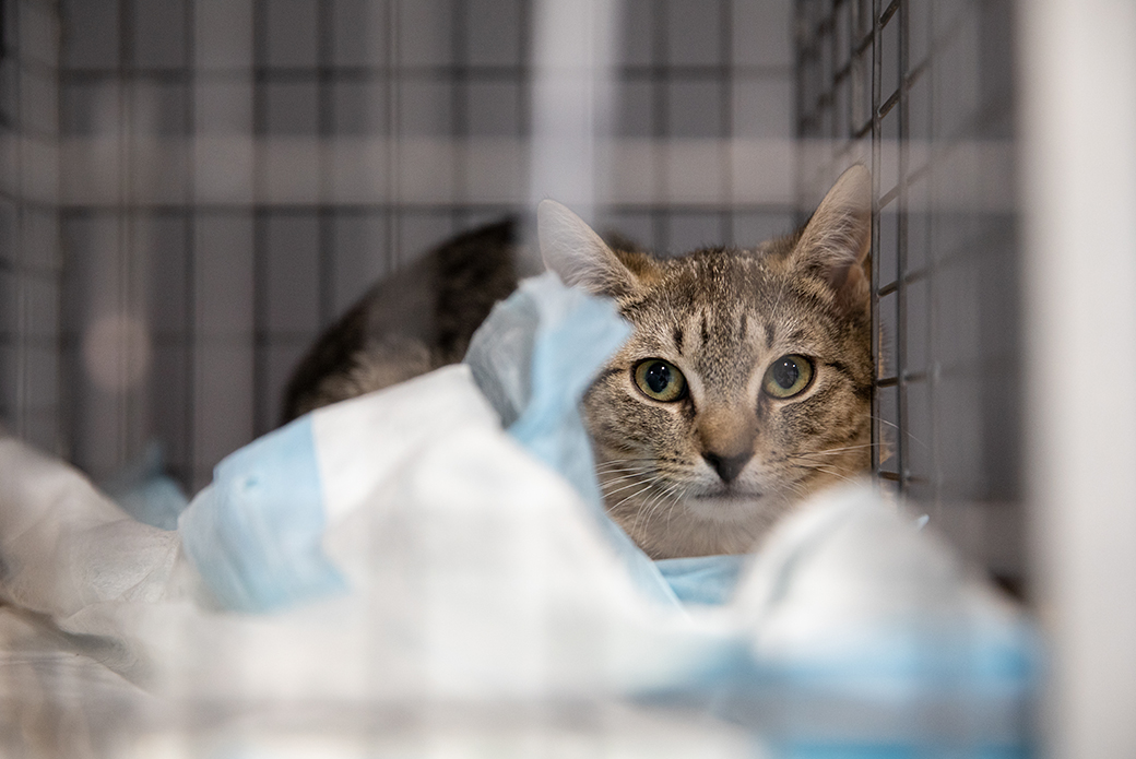 rescued cat in a carrier