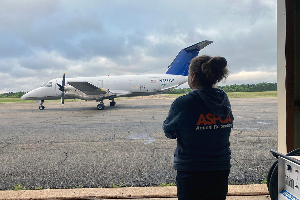 ASPCA relocation staff looking at a small plane
