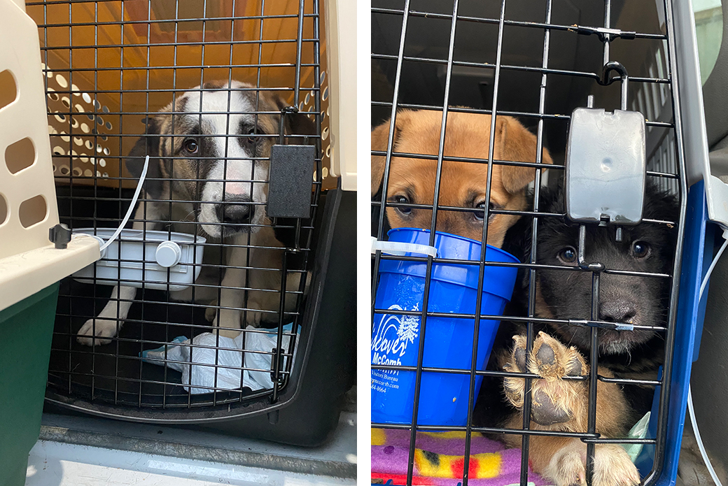 rescued puppies in transport