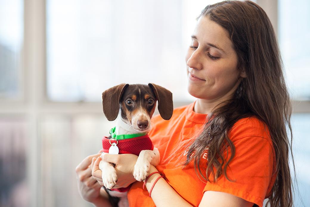 ASPCA staff holding a small dog