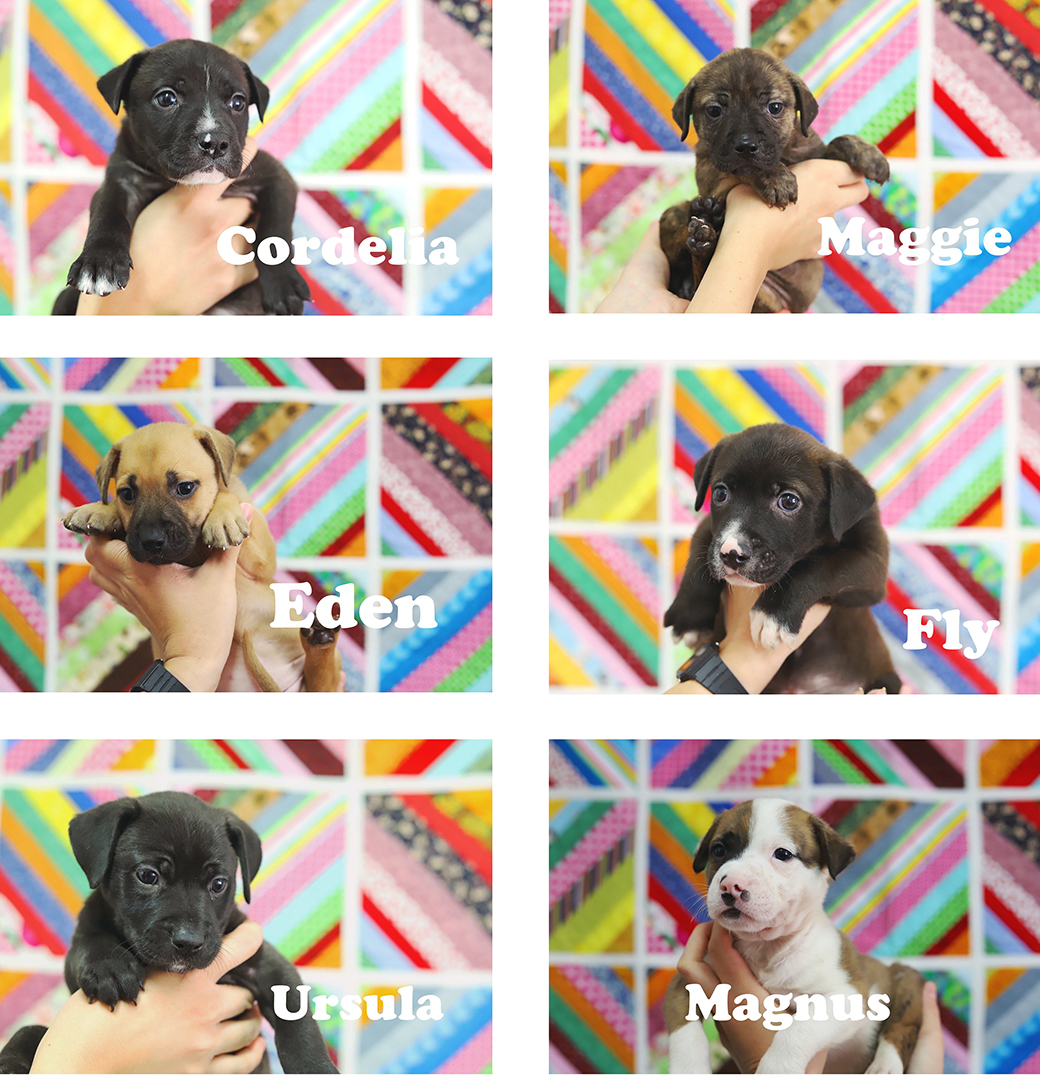 6 puppies from Baldwin Humane Society