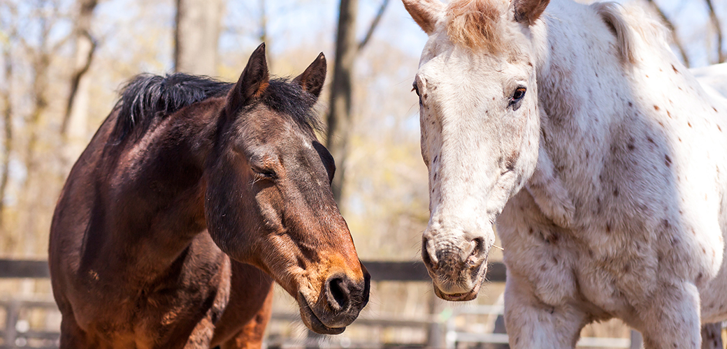 Did You Know American Horses Are Slaughtered Every Single Day? Join Our Twitter Chat to Learn More!