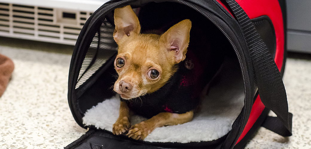 a small dog in a carrier