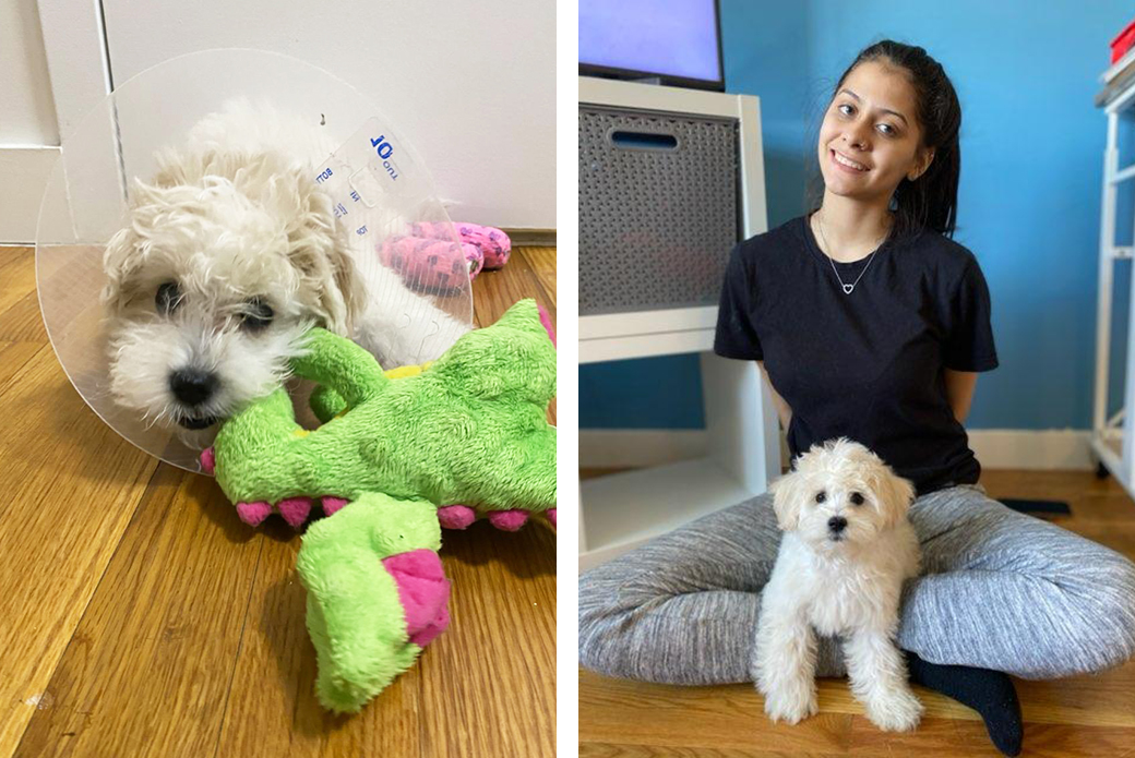 the maltese puppy at home healing with family