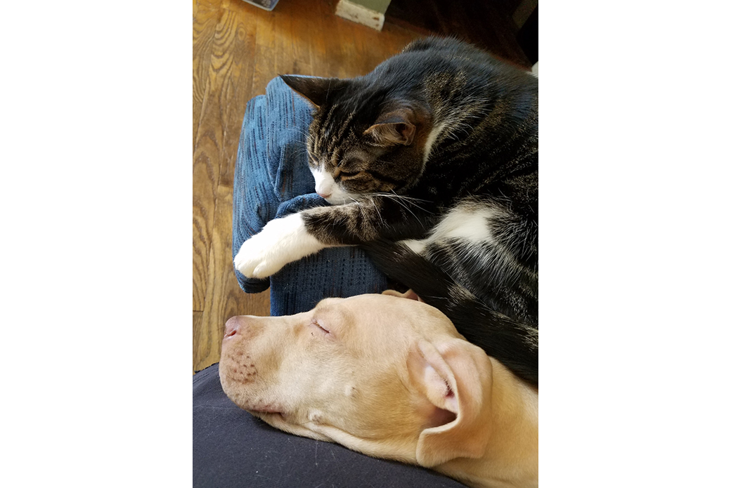 Xander resting with a cat