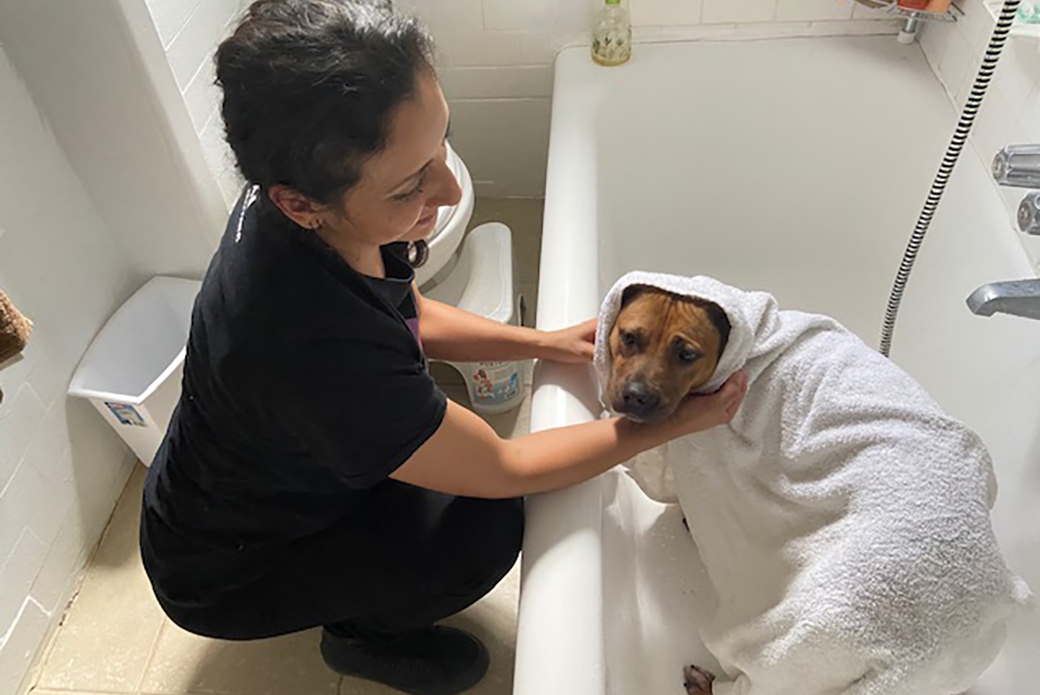 Soba drying off after a bath