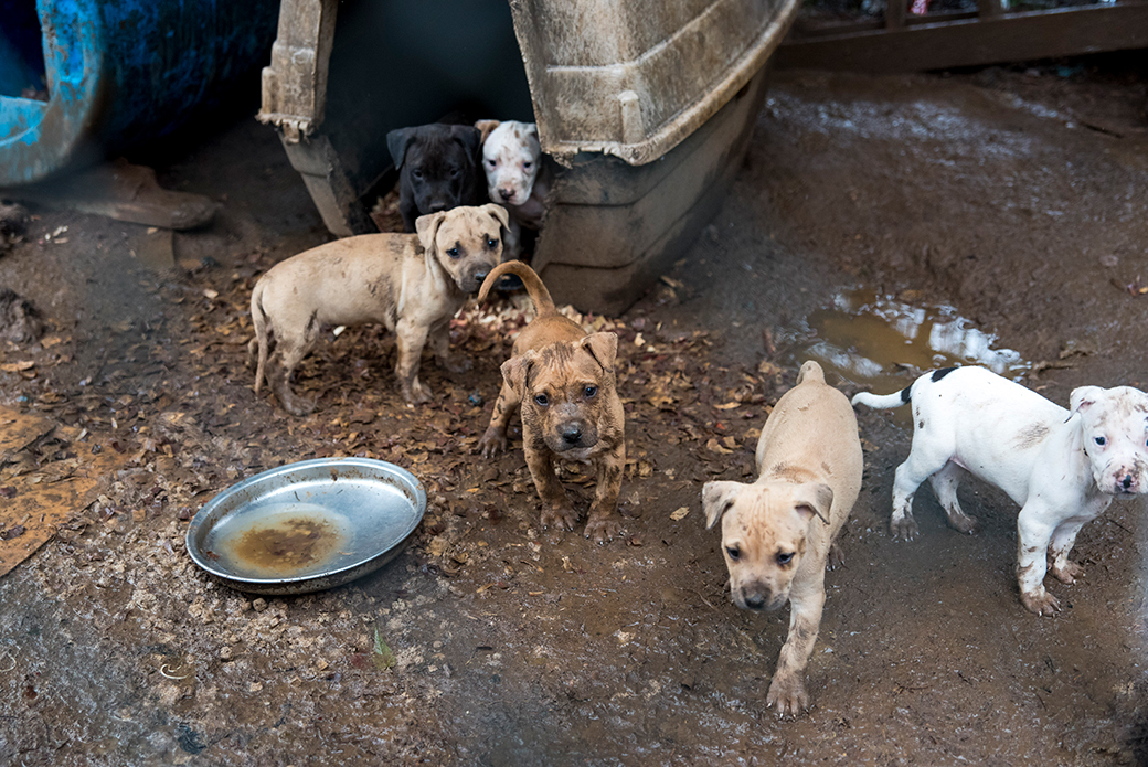 puppies being held in muddy conditions