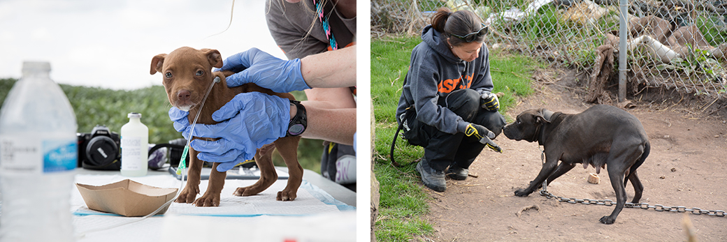 a puppy being treated and a scared chained dog being approached by a responder