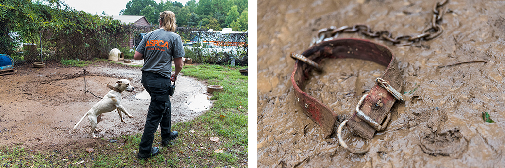 a dog chained trying to reach a responder and a collar and chain in mud