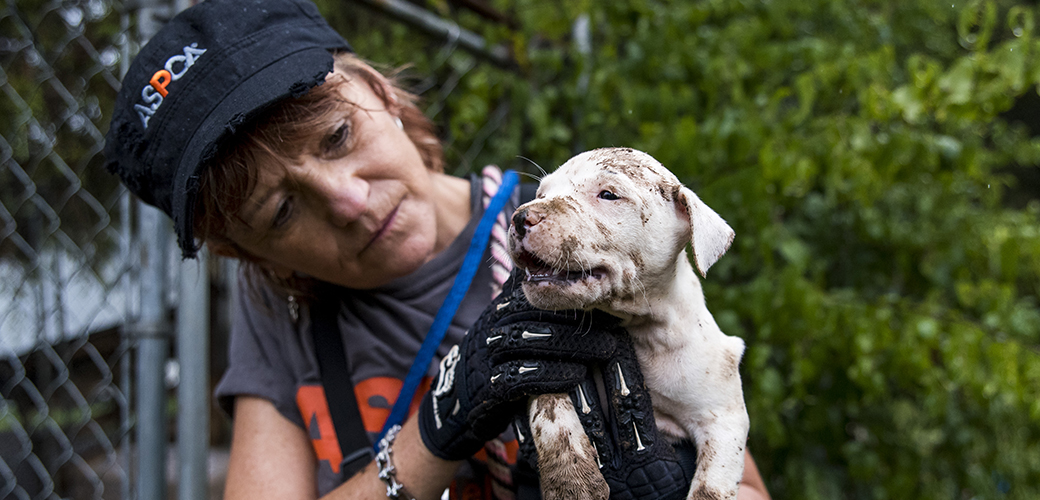 a puppy covered in mud being rescued from a dog fighting ring