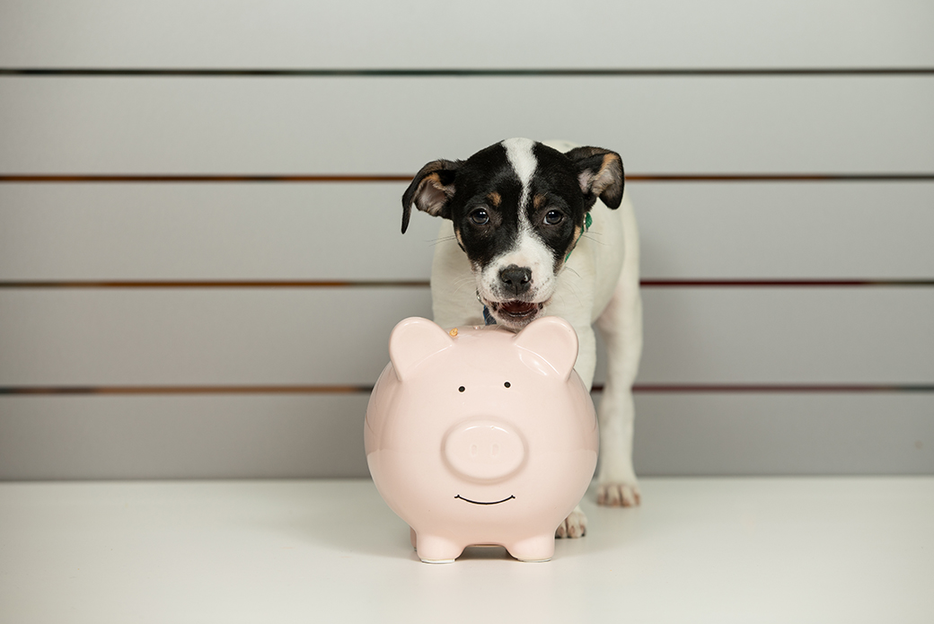 a puppy with a piggy bank