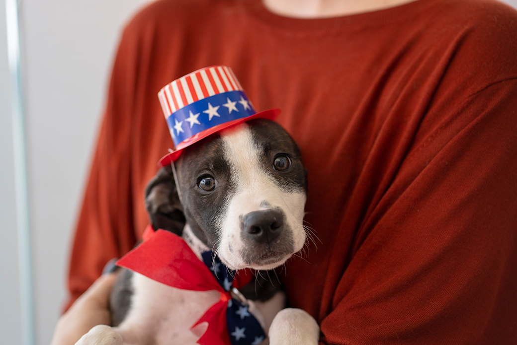 a puppy wearing an american flag hat