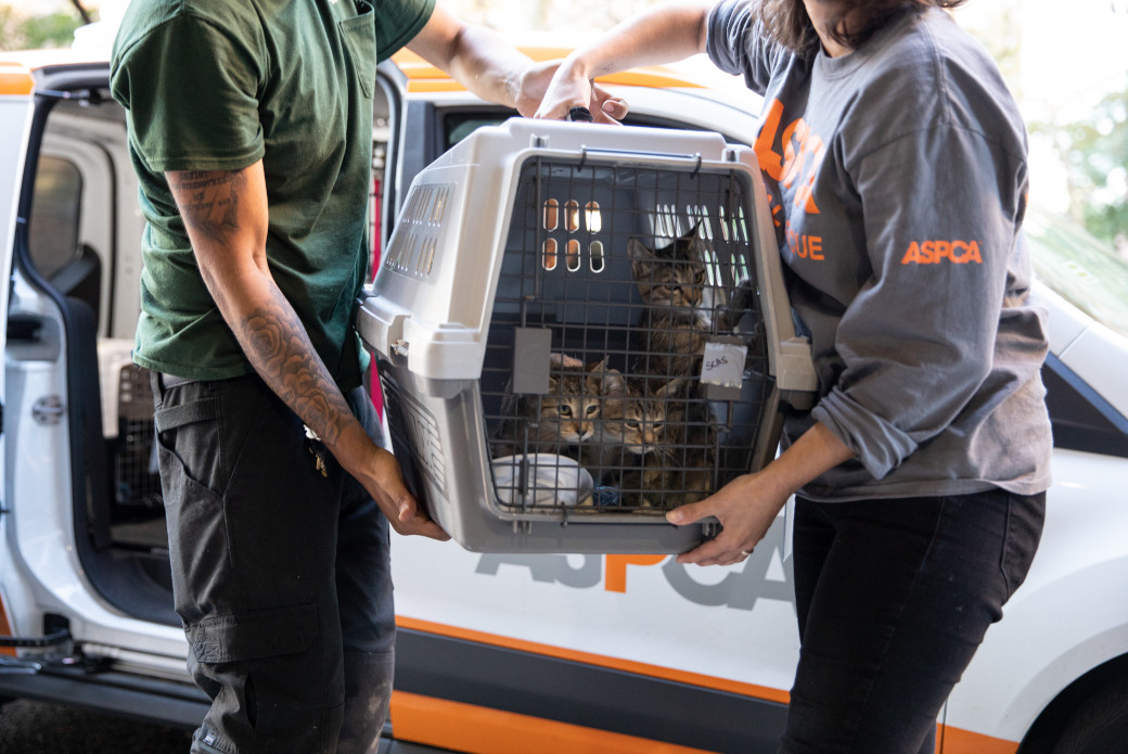 three cats in a crate being transported