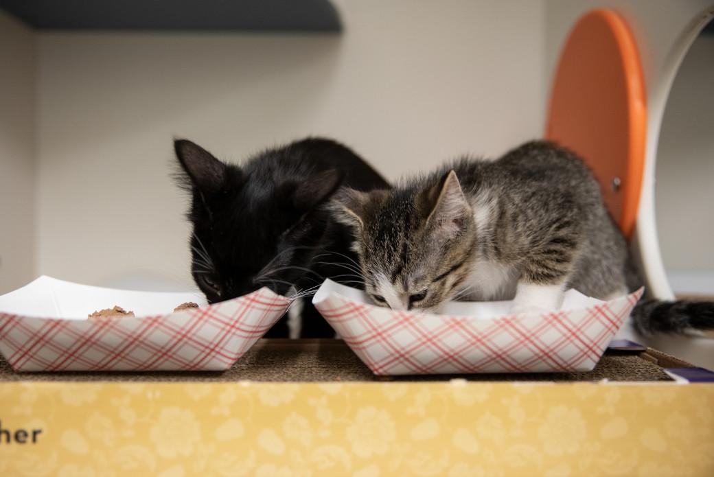 two kittens eating