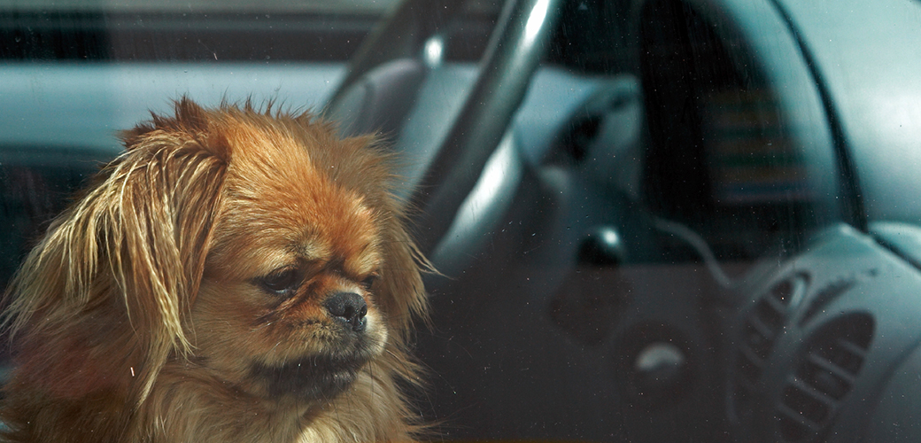 Download and Share Our Hot Weather Infographic to Prevent Pets from Suffering in Hot Cars