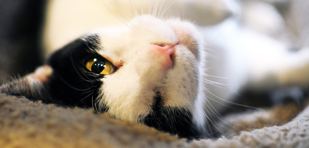 Downloadable Guide: Use Everyday Items to Spoil Your Shelter Cats