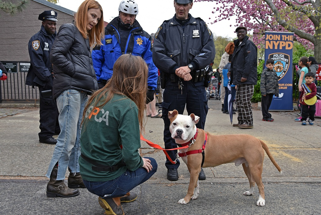 Tigger, a pit bull rescued by the NYPD, was one of two dogs adopted at PBSI and ASPCA's Earth Day celebration.