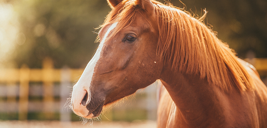 Exciting News for At-Risk Horses: The ASPCA Granted More than $1 Million to Equine Groups in 2015
