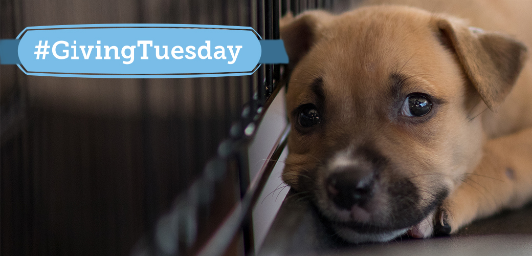 Giving Tuesday puppy
