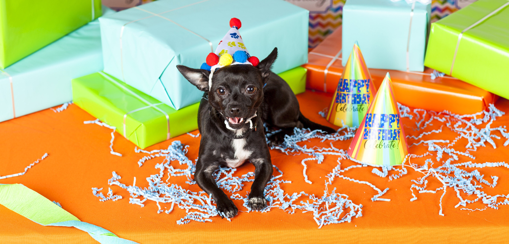 a dog with birthday presents and decorations