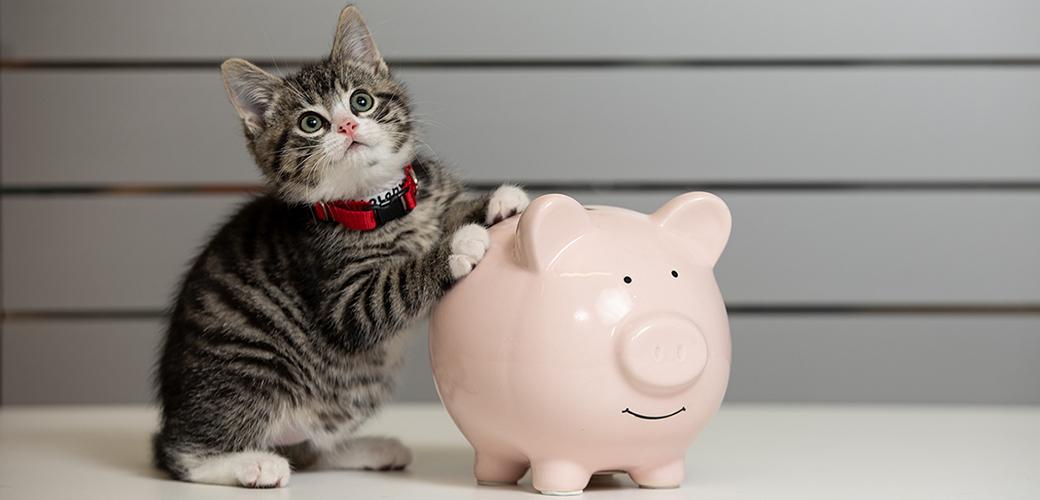 a kitten and piggy bank