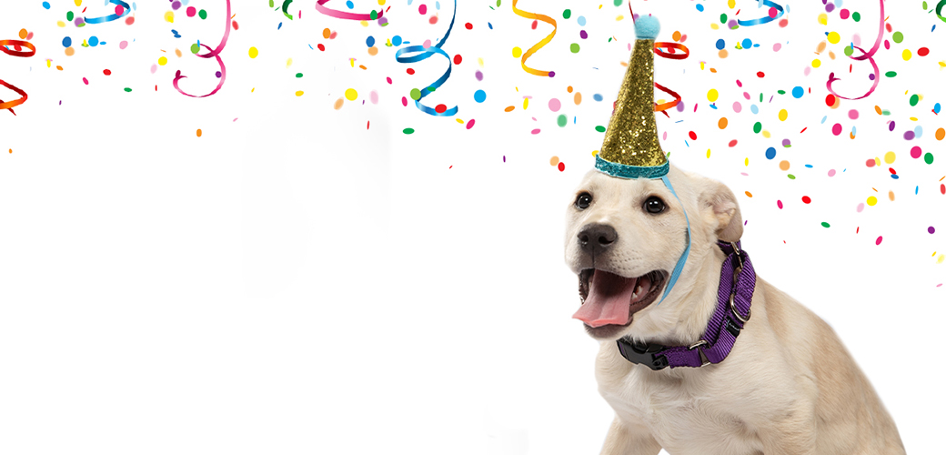 A white dog with a birthday hat on and streamers in the background