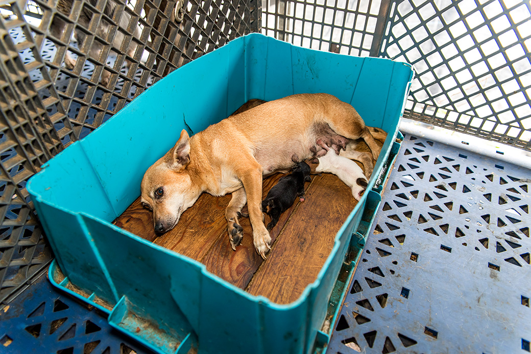 Aspca Helps To Rescue More Than 100 Dogs From Fl Puppy Mill Aspca