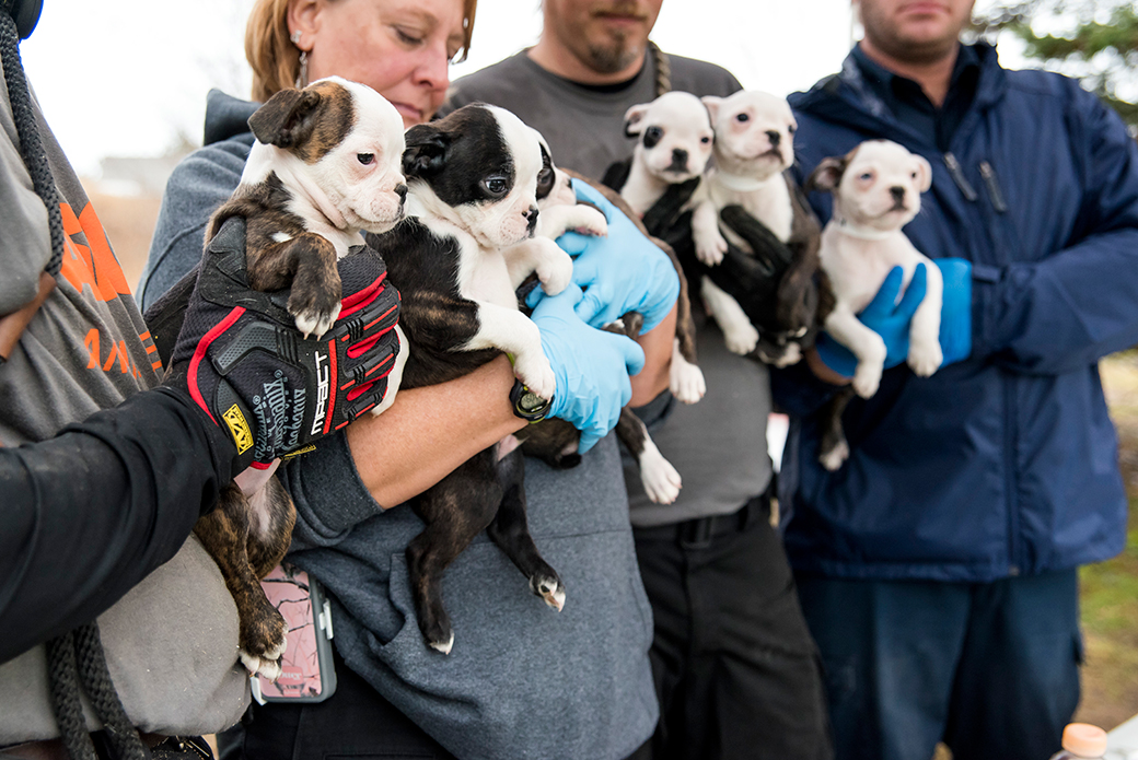 Breaking News: ASPCA Assists Authorities in Rescuing 50 Dogs from Michigan Puppy Mill