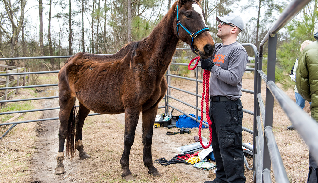 View Exclusive Photos from Our Largest Companion Animal Rescue Ever